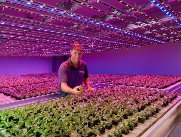 Светодиодное освещение благоприятным образом воздействует на рост растений