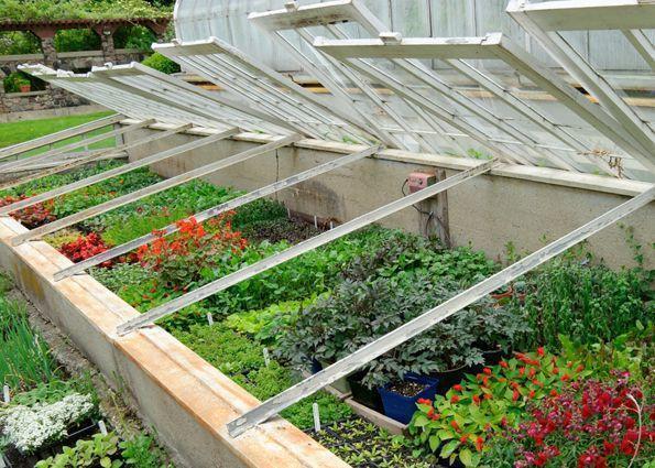 Самым примитивным защитником растений от воздействий окружающей среды принято считать декоративный парник